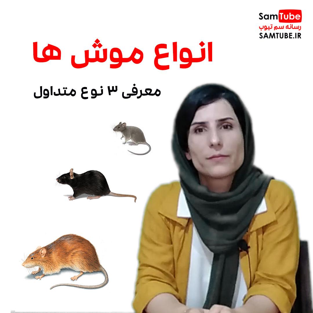 معرفی انواع موش های متداول در ایران