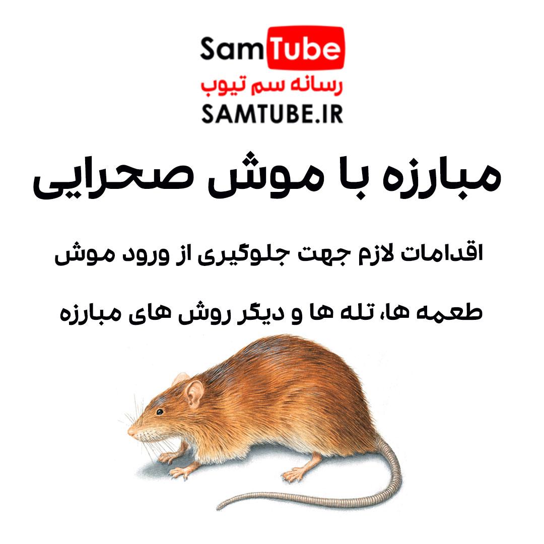 مبارزه با موش صحرایی